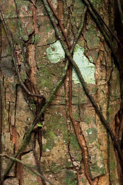 treetrunkI
